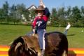 Kalandfarm - Rodeo bika 2